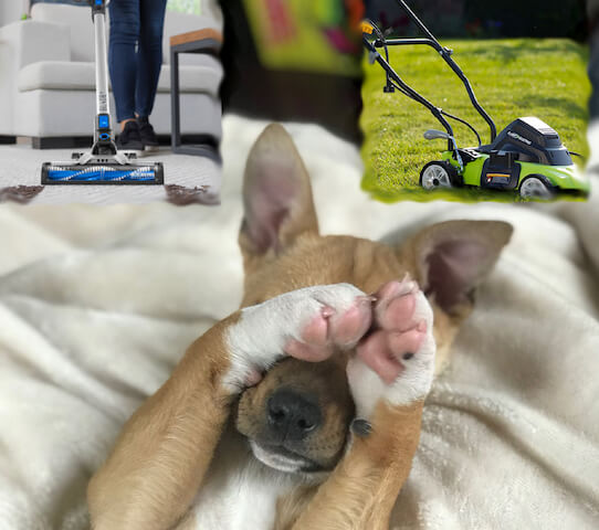 Dog's Fear of Vacuum Cleaners and Lawnmowers