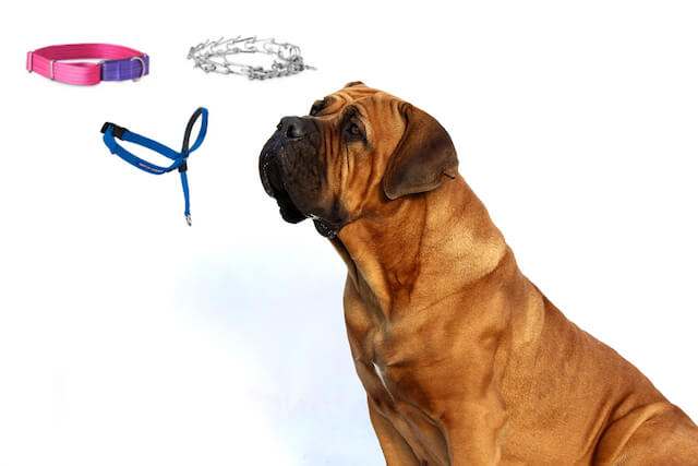 Best dog training collars image