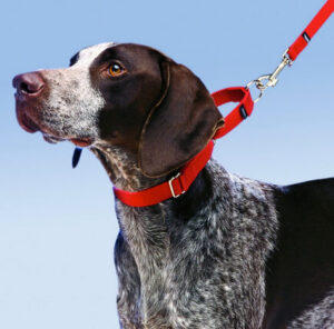 Martingale collar image