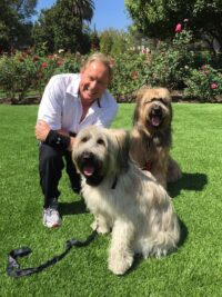 Remedy Dog Training