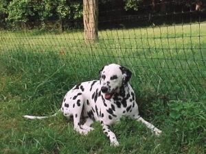 Best Friend Fence image