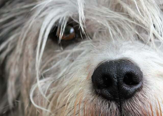 Dog aggression image