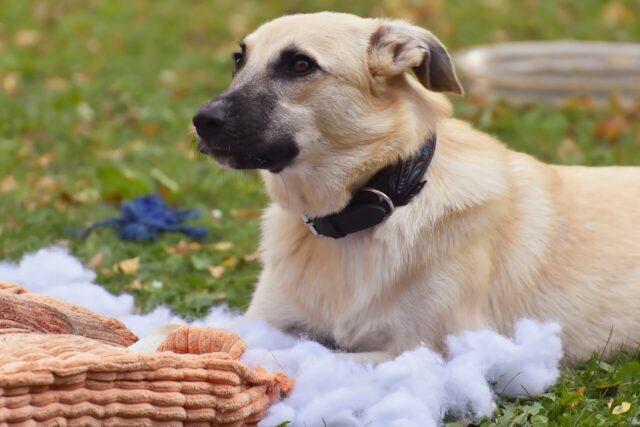 Destructive dog behavior image
