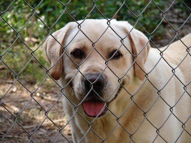 Dog fence image