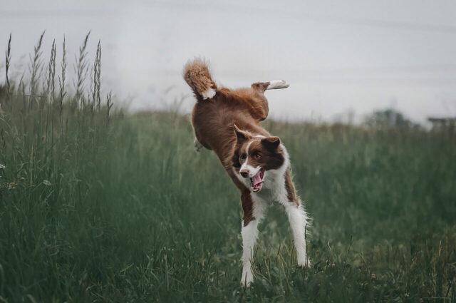 Dog hyperactivity image