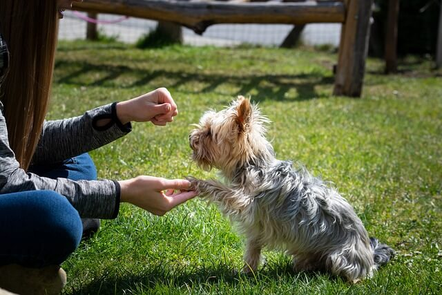 Top Ten Warning Signs when Hiring a Dog Trainer