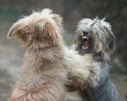 Dog aggression training image