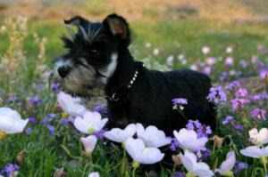 Dog Remedies 101 image
