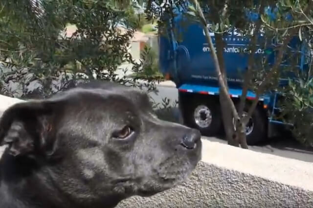 How to Handle Your Dog's Fear of Garbage Trucks