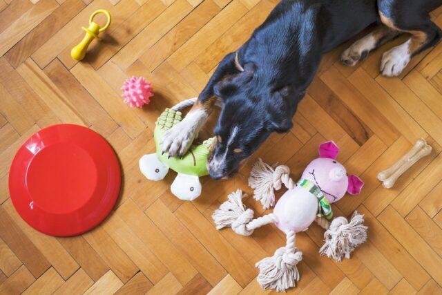 Dog Toy Safety image