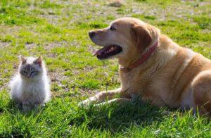 Therapeutic benefits of animals