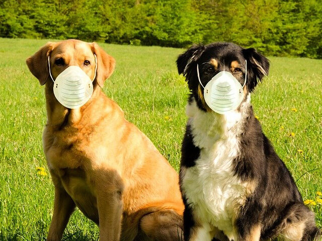 8 Most Dangerous Hazards for Dogs